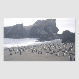 Chinstrap Penguins on Seal Island Rectangular Sticker