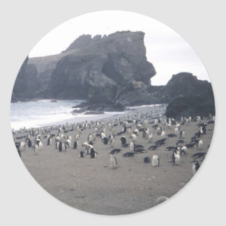 Chinstrap Penguins on Seal Island Round Sticker
