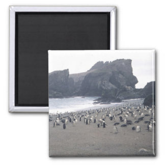 Chinstrap Penguins on Seal Island Square Magnet