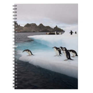 chinstrap penguins, Pygoscelis antarctica, 2 Notebooks
