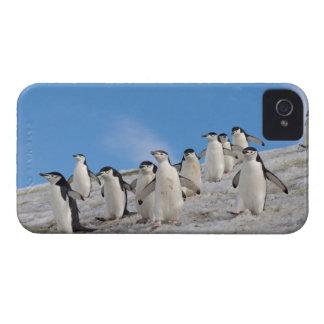 chinstrap penguins, Pygoscelis antarctica, iPhone 4 Case-Mate Case
