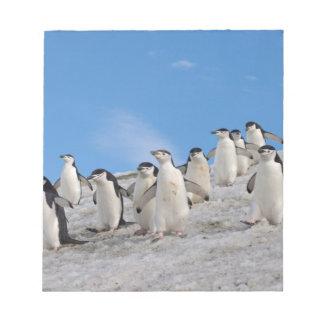 chinstrap penguins, Pygoscelis antarctica, Notepad