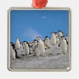 chinstrap penguins, Pygoscelis antarctica, Silver-Colored Square Decoration