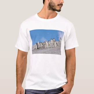 chinstrap penguins, Pygoscelis antarctica, T-Shirt