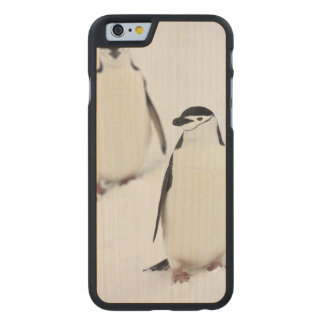 Chinstrap Penguins Pygoscelis antarcticus), Carved Maple iPhone 6 Case