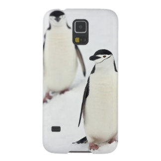 Chinstrap Penguins Pygoscelis antarcticus), Case For Galaxy S5