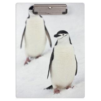 Chinstrap Penguins Pygoscelis antarcticus), Clipboard