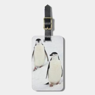 Chinstrap Penguins Pygoscelis antarcticus), Luggage Tag