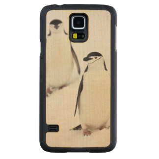 Chinstrap Penguins Pygoscelis antarcticus), Maple Galaxy S5 Slim Case