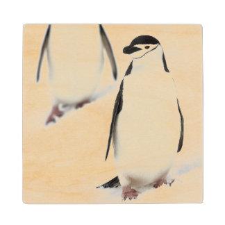 Chinstrap Penguins Pygoscelis antarcticus), Maple Wood Coaster