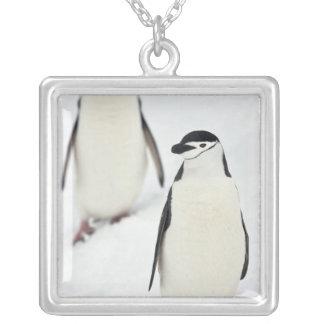 Chinstrap Penguins Pygoscelis antarcticus), Square Pendant Necklace