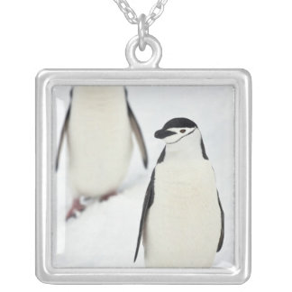 Chinstrap Penguins Pygoscelis antarcticus), Silver Plated Necklace
