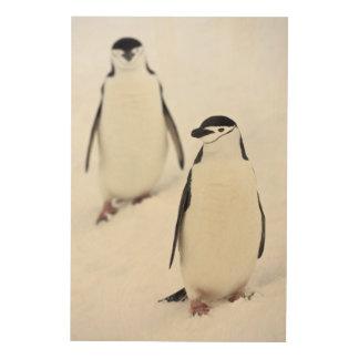 Chinstrap Penguins Pygoscelis antarcticus), Wood Wall Decor