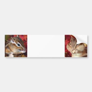 Chipmunk and Autumn (9) photo Bumper Sticker