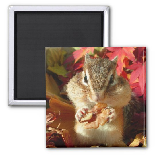Chipmunk and Autumn (9) photo Square Magnet