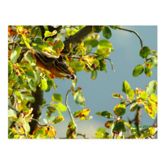 Chipmunk and berries postcard