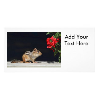 Chipmunk and Red Flowers Photo Photo Cards