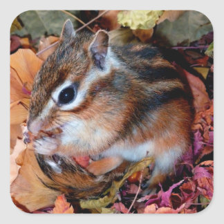 Chipmunk , Autumn (10) photo Square Sticker