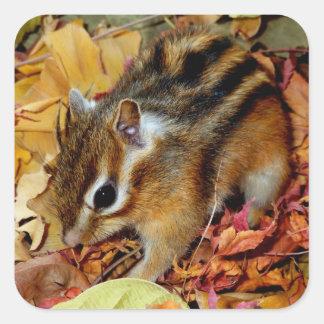 Chipmunk , Autumn (12) photo Square Sticker