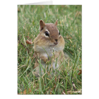 Chipmunk Cheeks Card