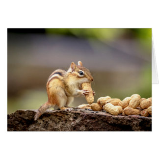 Chipmunk eating a peanut card