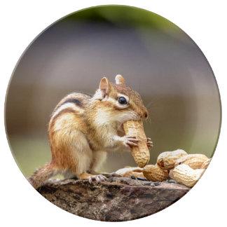 Chipmunk eating a peanut plate