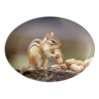 Chipmunk eating a peanut porcelain serving platter