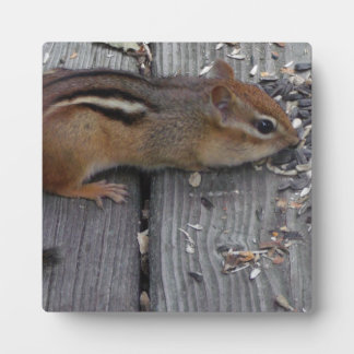 Chipmunk Eating Plaque
