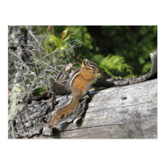Chipmunk in the Forest Post Cards