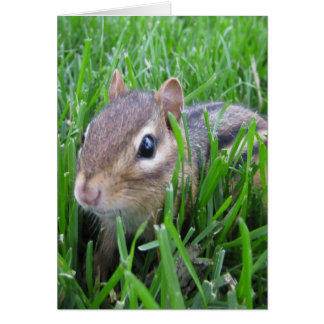Chipmunk In The Grass Card