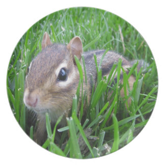 Chipmunk In The Grass Plates