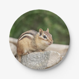 Chipmunk on a rock 7 inch paper plate