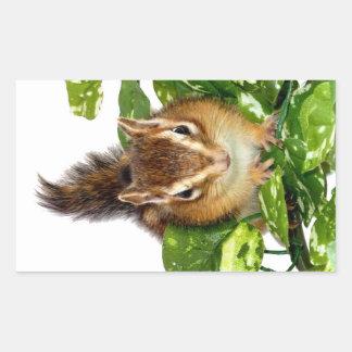 Chipmunk photo (25) rectangular sticker