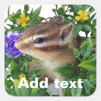 Chipmunk , photo (4) type-3 square sticker