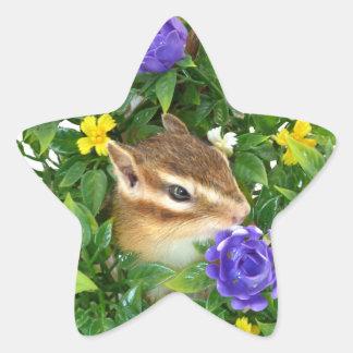 Chipmunk , photo (4) type-3 star sticker