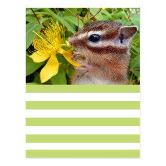 Chipmunk photo postcard