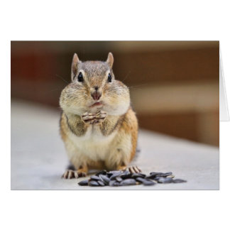 Chipmunk Picture Greeting Cards