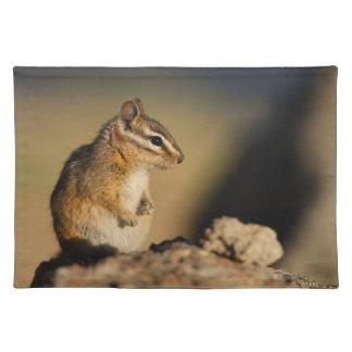 chipmunk place mats