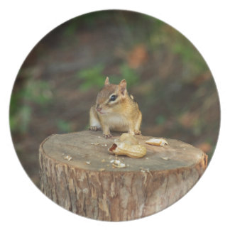 Chipmunk Dinner Plates