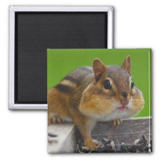 Chipmunk Square Magnet