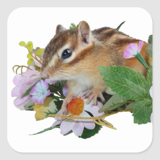 chipmunk , Squirrel ,  photo Square Sticker