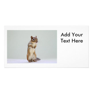 Chipmunk Standing Up Photo Personalized Photo Card