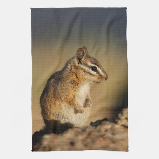 chipmunk towel