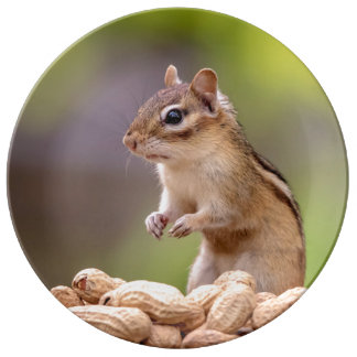 Chipmunk with peanuts porcelain plate