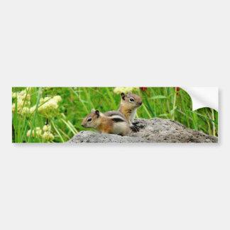 Chipmunks and wildflowers bumper sticker