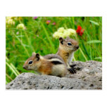 Chipmunks and wildflowers post card