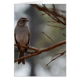 Chipping Sparrow in Crepe Myrtle Tree Greeting Cards