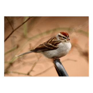 Chipping Sparrow Pack Of Chubby Business Cards