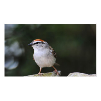 Chipping Sparrow Pack Of Standard Business Cards