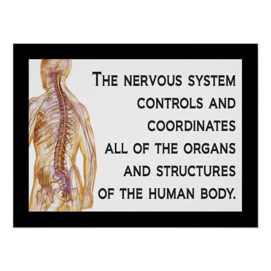 Chiropractic Nerves Quote Poster Customise